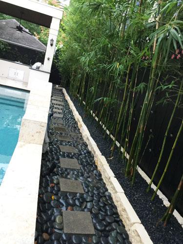 Landscaping Boulders Houston : Houston bamboo nursery