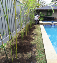 Houston Bamboo Bamboo Privacy Fence Line